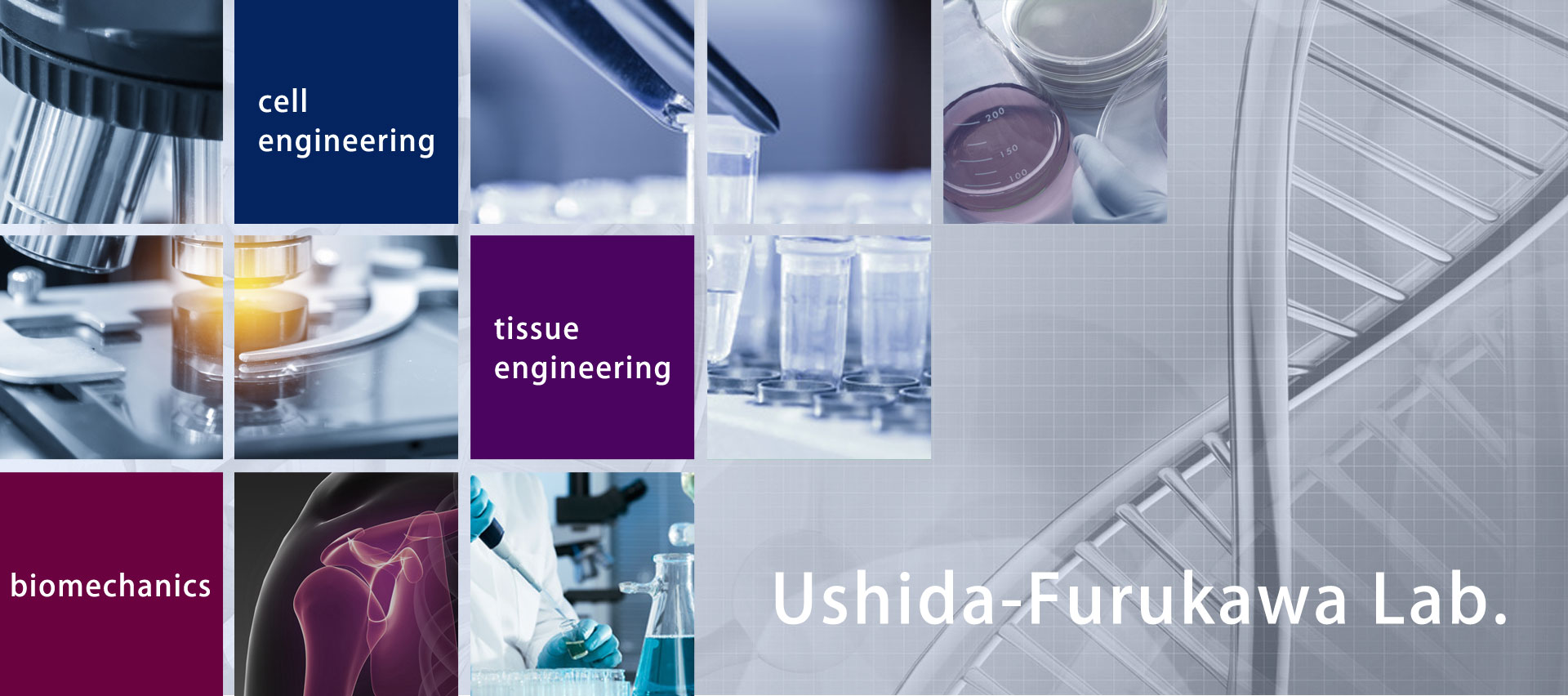 cell engineering, tissue engineering, biomechanics, Ushida-Furukawa Lab.